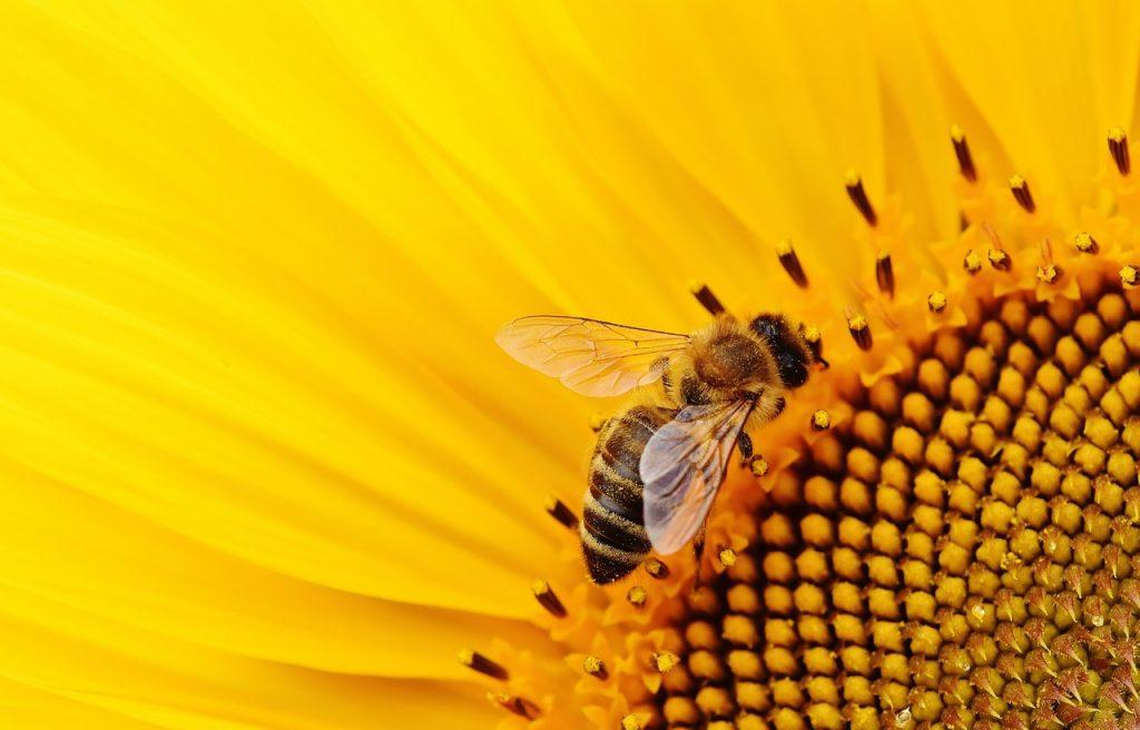 cash and repair protection des abeilles
